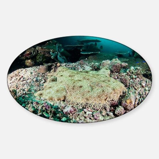 Tassled wobbegong - Sticker (Oval)
