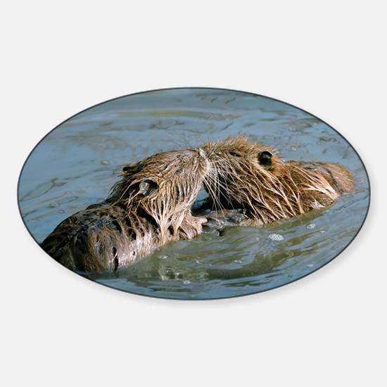 Young coypus playing - Sticker (Oval)