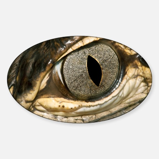 American alligator eye - Sticker (Oval)