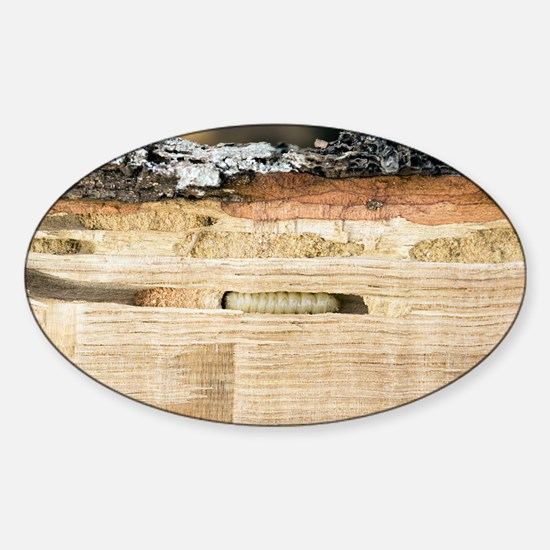Wood-boring insect larva - Sticker (Oval)