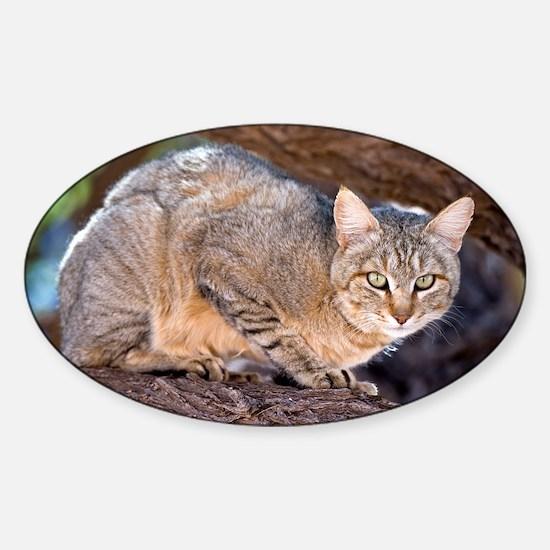 African wildcat - Sticker (Oval)