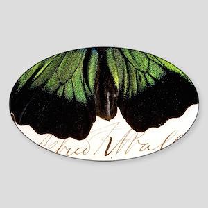 irdwing - Sticker (Oval)