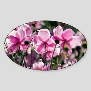 Anemone hupehensis - Sticker (Oval)