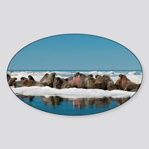 Atlantic walrus - Sticker (Oval)