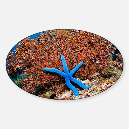 Blue seastar - Sticker (Oval)