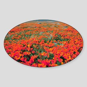 ) - Sticker (Oval)