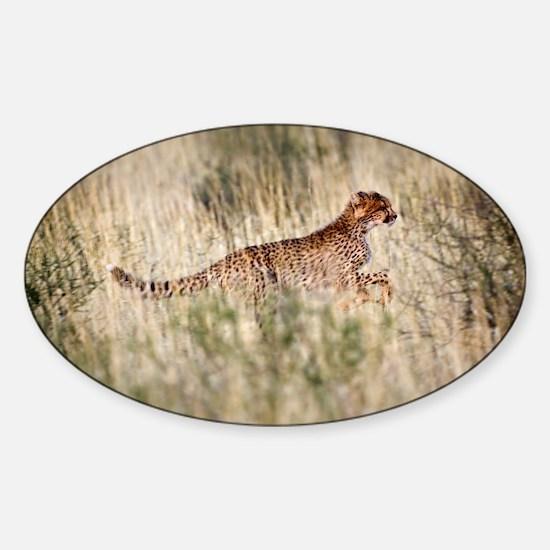 Cheetah in grass - Sticker (Oval)