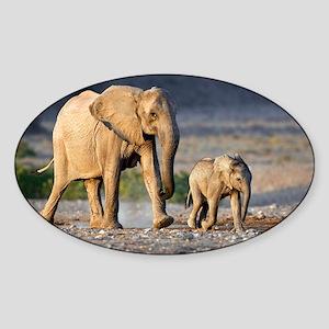 Desert-adapted elephants - Sticker (Oval)