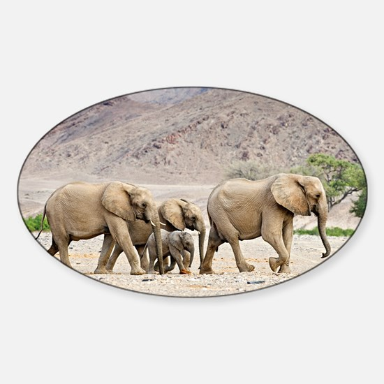Desert-adapted elephants - Sticker (Oval)