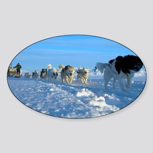Dogsledge, Northern Greenland - Sticker (Oval)