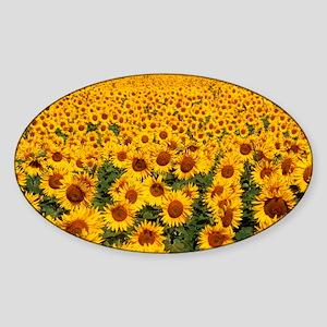 Field of sunflowers, France - Sticker (Oval)