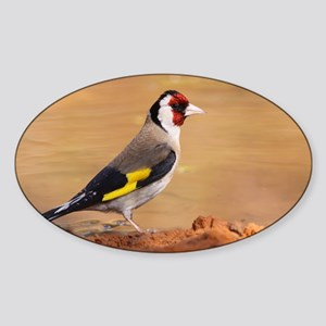 European Goldfinch - Sticker (Oval)