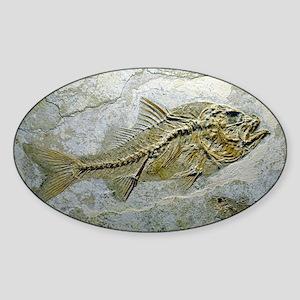 Fish fossil - Sticker (Oval)