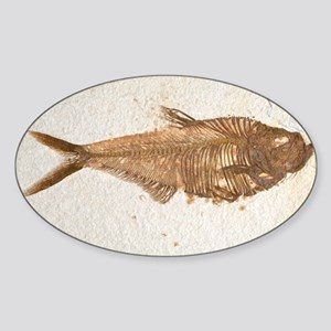 Fossilised fish - Sticker (Oval)