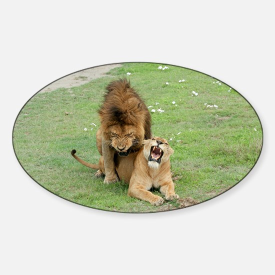 Lion and lioness mating - Sticker (Oval)