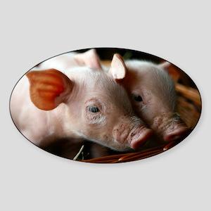 Piglets - Sticker (Oval)