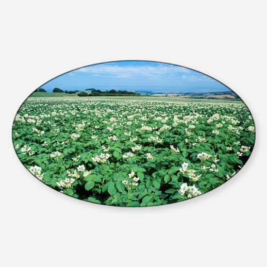 Potato field - Sticker (Oval)