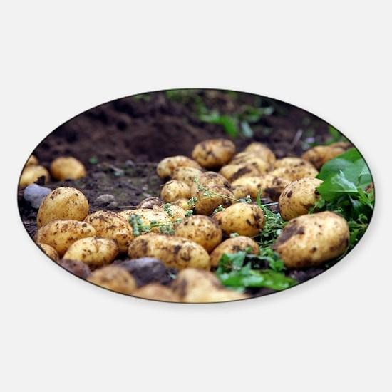 Potato harvest - Sticker (Oval)