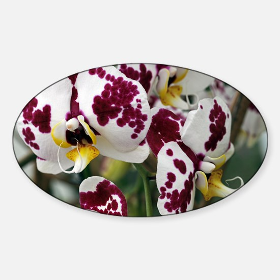 Orchid flowers - Sticker (Oval)