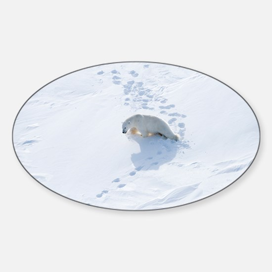 Polar bear - Sticker (Oval)