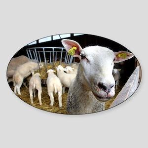 Sheep on a farm - Sticker (Oval)