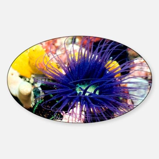 Tube anemone - Sticker (Oval)