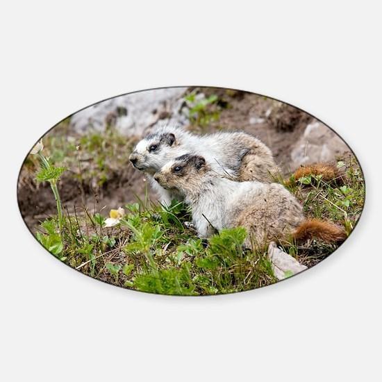 Two Hoary marmots - Sticker (Oval)