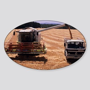 Wheat harvest - Sticker (Oval)