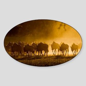 Wildebeest herd - Sticker (Oval)