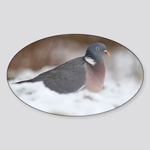 Wood pigeon in snow - Sticker (Oval)