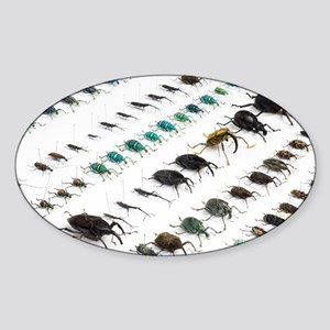 Beetle collection - Sticker (Oval)