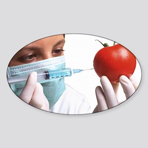 Scientist injects GM tomato - Sticker (Oval)