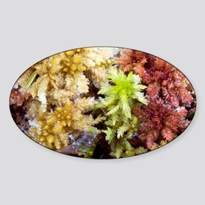 Peat mosses (Sphagnum sp.) - Sticker (Oval)