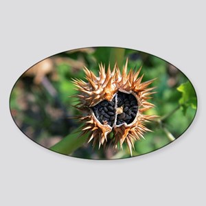 Thorn apple seed pod - Sticker (Oval)