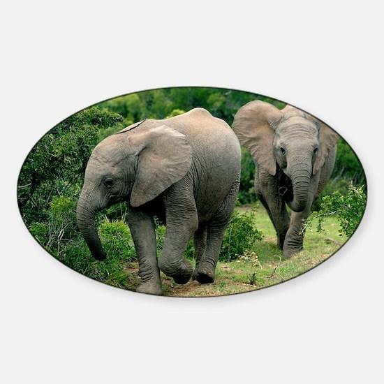 African elephants - Sticker (Oval)