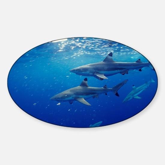 Blacktip reef sharks - Sticker (Oval)