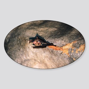 Bat on cave roof - Sticker (Oval)