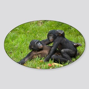 Bonobo apes mating - Sticker (Oval)
