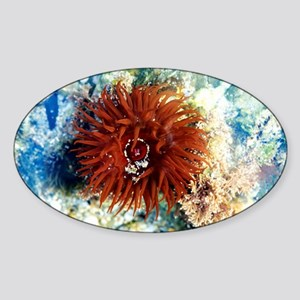 Beadlet anemone - Sticker (Oval)