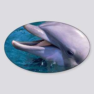 Bottlenose dolphin - Sticker (Oval)
