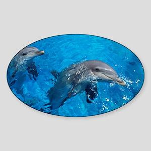 Bottlenose dolphins - Sticker (Oval)