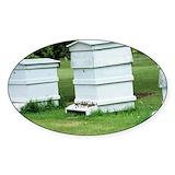 Beehive Single