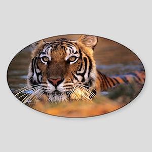 Bengal tiger (Panthera tigris) - Sticker (Oval)