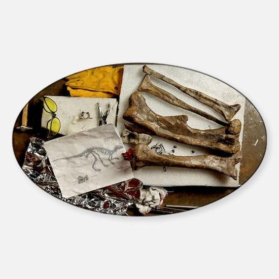 Camptosaurus bones - Sticker (Oval)