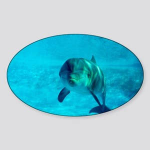 Dolphin in captivity - Sticker (Oval)