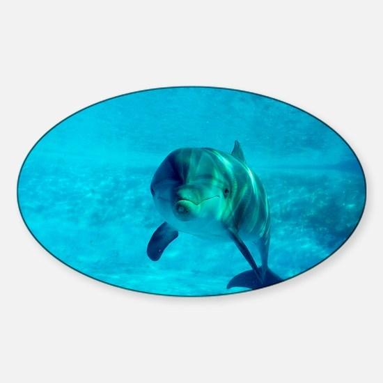 Dolphin in captivity - Sticker (Oval)
