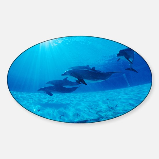 Dolphins in captivity - Sticker (Oval)