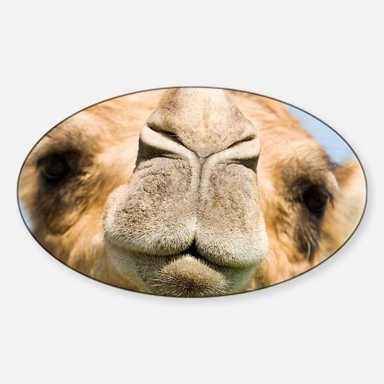 Dromedary camel - Sticker (Oval)