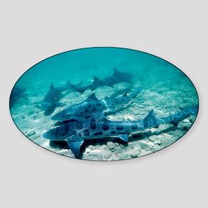 Female leopard sharks - Sticker (Oval)