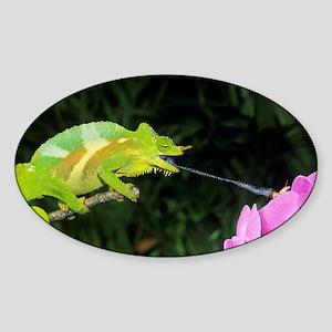 Four-horned chameleon - Sticker (Oval)